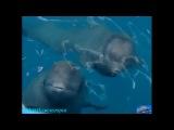 «Один день в дельфинарии Морская Звезда» (Документальный фильм, Сочи, Россия, 2007)